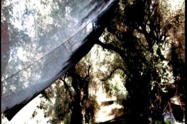 Κρήτη 4.ελιές